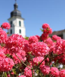 Abgesagt - Das Fürstliche Gartenfest Schloss Fasanerie
