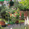 Biogartenmesse Orangerie Schloßpark Biebrich 8