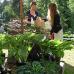Biogartenmesse Orangerie Schloßpark Biebrich 4