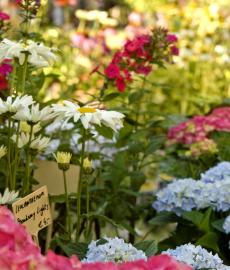 Findet Online statt - Stilblüte Schloss Lüntenbeck