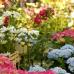 Findet Online statt - Stilblüte Schloss Lüntenbeck 7