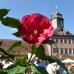 Das Fürstliche Gartenfest Schloss Wolfsgarten 5