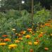 Schloß Ippenburg öffnet seine Gärten 1