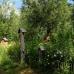 Schloß Ippenburg öffnet seine Gärten 9