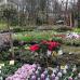 Abgesagt - Pflanzenmarkt am Kiekeberg 5