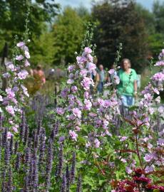 Veranstaltung: Landesgartenschau Kamp-Lintfort 2020