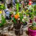 Frühjahrs-Ausstellung Kassel 1