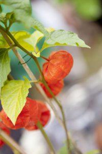 Herbstliche Gartenveranstaltung gesucht?