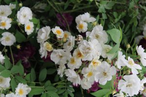 Eine Gartenveranstaltung Im Februar macht Lust auf Frühling...