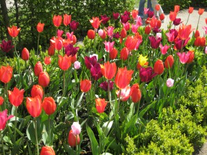 Frühlingsveranstaltung am Wochenende