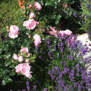 Gartenveranstaltung im Februar