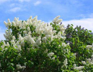 Eine Frühlingsveranstaltung läutet die Gartensaison ein!