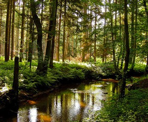 Schutzgemeinschaft Deutscher Wald