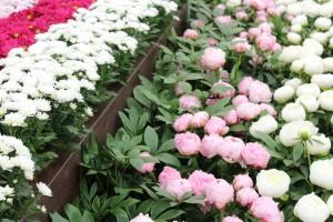 Beetrosen sind anderen Blumen gute Nachbarn!
