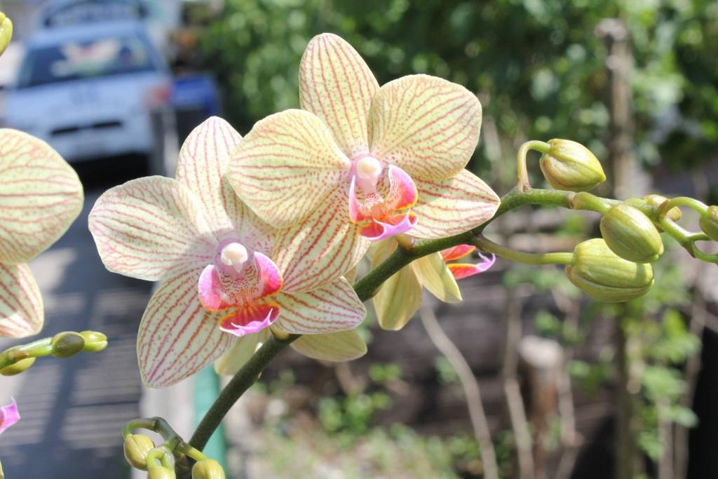 Orchideen In Der Glasschale Eine Tolle Idee
