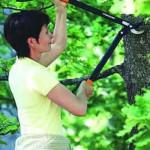 Gartenhelfer: Getriebsastschere