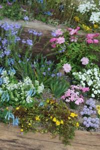 Dank der Gartenarbeit im Oktober wird der Frühjahrsgarten schön bunt!
