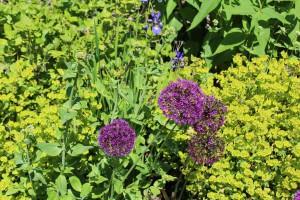 Unsere Gastbloggerin kennt nicht nur pflegeleichte Pflanzen...