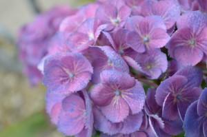 Blumen in Hülle und Fülle bei der Landesgartenschau Eutin