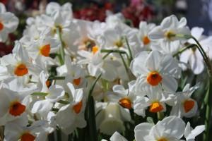Frühlingsveranstaltung an Ostern: Landgeflüster Gut Emkendorf