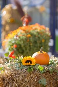 Gartenveranstaltung: Neuwieder Markttage
