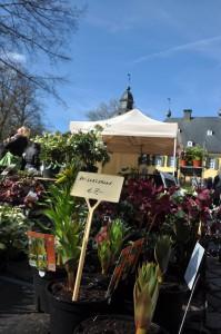 Frühlingsveranstaltung am Wochenende: Die Stilblüte Schloss Lüntenbeck