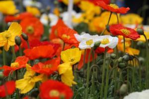 Gartenplanung muss nicht immer teuer sein