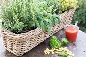 Küchenkräuter für Tomatenchutney und Co.