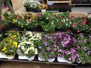 Gartenmarkt gesucht?