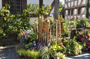 Gartenveranstaltung: Herbstlicher Pflanzenmarkt im Hessenpark