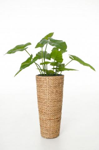 Gewinnen Sie Einkaufsgutscheine für Pflanzkübel und mehr!