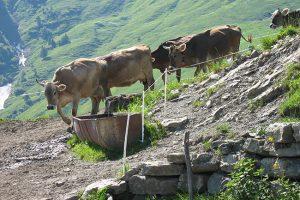 Käselam Moosbrugger: Beste Qualität durch traditionelle Herstellungsweisen