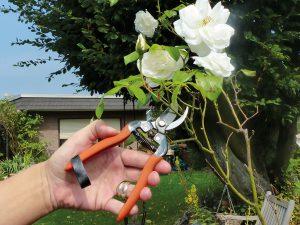 Gartenschere gebraucht?