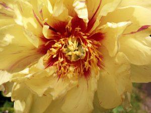 Jubiläum für Rosentage und Herbstzauber im Gartenjahr 2019