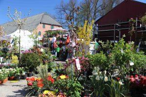 Bunte Blumenwelt bei der Gartenveranstaltung